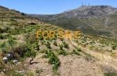 8016, Vineyard in Stavros - Lefkes for sale