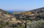 10107, Olive grove on 6 stremmata in Lagkada for sale