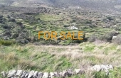 13001, Lefkes vineyard on 3,000 square meters land for sale